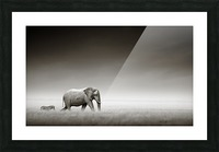 Elephant with zebra (Artistic processing) Picture Frame print