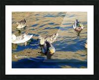 Ducks on Saguaro Lake  Impression et Cadre photo
