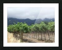 Napa Califoria Grape Vines summer 2007  Picture Frame print