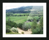 Looking Down at Napa Califoria 2007  Picture Frame print