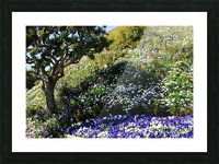 Dana Point Cali flowers on a hill  near sunset  Picture Frame print
