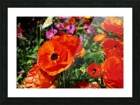 Garden with Orange Flowers Growing Picture Frame print