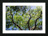 Puissance Picture Frame print