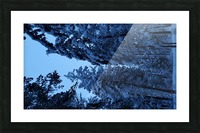 Twilight Woods Picture Frame print