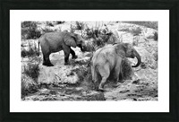 Elephant Youth Picture Frame print