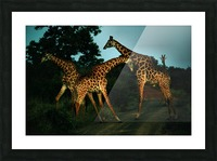 Giraffes South Africa Picture Frame print