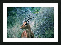 African Game Picture Frame print