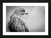 EAGLE EYE Picture Frame print