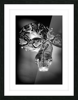 Thailand  Snake Surprise Picture Frame print