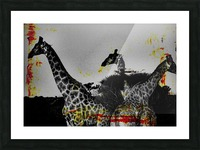 Giraffes Collage Picture Frame print