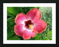 Awesome Petals Picture Frame print