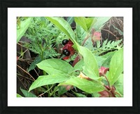Shaded Berries Picture Frame print