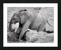 Elephant Baby Picture Frame print