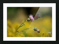 0017- Monarch Meal Picture Frame print