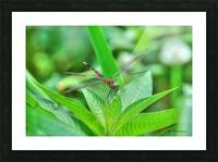 12-4 Orange Dragonfly Picture Frame print