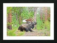 2832- Siesta Picture Frame print