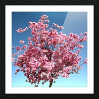Cherry Blossom on Blue Picture Frame print