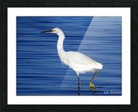 Heron White Walking Picture Frame print