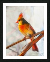Cardinal Picture Frame print
