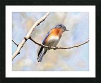 Blue Bird Picture Frame print