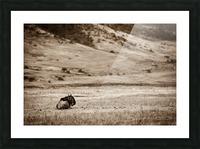 La solitude du gnou Picture Frame print