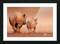Black Rhinoceros calf and cow walking away Picture Frame print