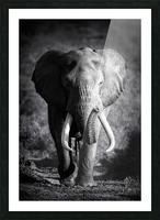Elephant Bull Picture Frame print