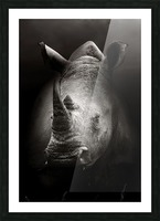 Rhinoceros portrait Picture Frame print