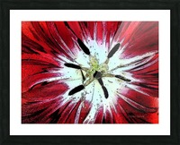 Red Tulip Picture Frame print