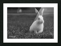 Lovely Rabbit Picture Frame print