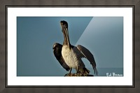 ready to fly Picture Frame print