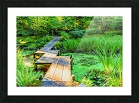 wooden bridge across a pond with duckweed and leaves of water lilies Picture Frame print
