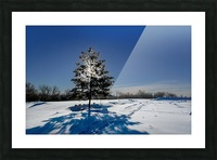 Beautiful, colorful and cold winter with snow and frost Picture Frame print