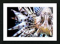 Lion Fish Picture Frame print