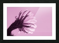 Cactus Flower in Pink Picture Frame print