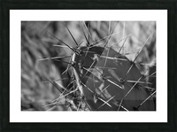 Prickly Pear Picture Frame print