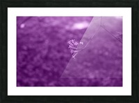 Pretty Bloom Red Violet Picture Frame print