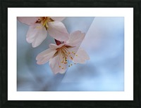 Spring Pastels Picture Frame print