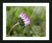 Spring flower Picture Frame print