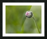 Flower bud Picture Frame print