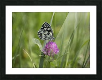 Marbled white Picture Frame print