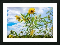 Sunny flower Picture Frame print