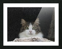 Cat portrait Picture Frame print