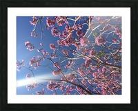 Anime cherry blossom xx Picture Frame print