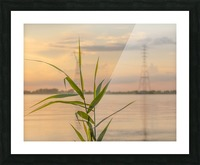 The force of nature  -  Force de la nature Picture Frame print