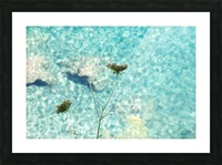 Flowers on the sea Picture Frame print