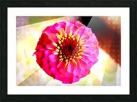 Rainbow daisy Picture Frame print