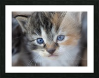 Kitten Face Picture Frame print