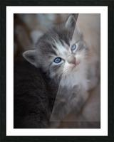 Gray Kitten Picture Frame print