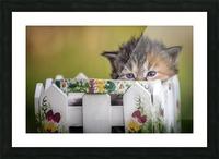 Kitten in basket Picture Frame print